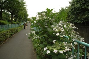 La promenade de la Kandagawa