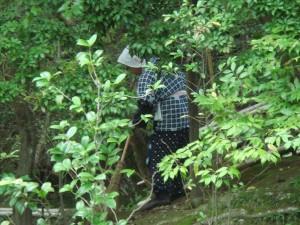 Un petit métier méconnu : balayeuse de feuilles dans la forêt...